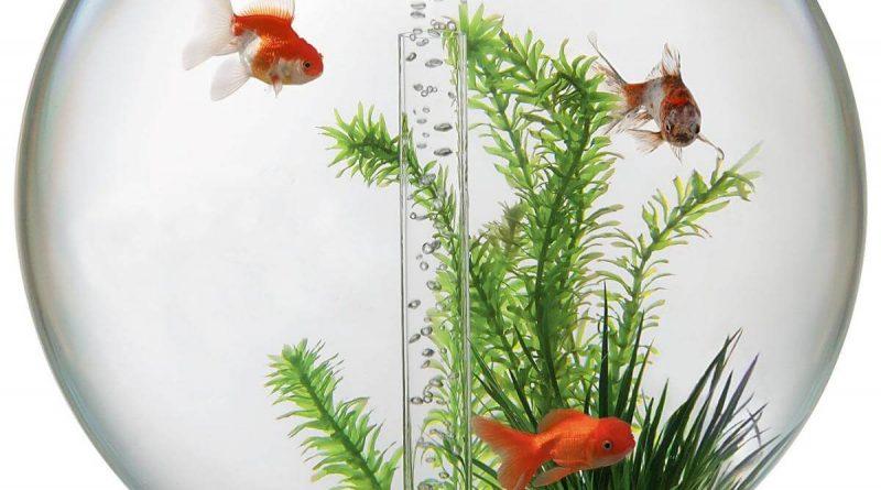 Температура в аквариумах